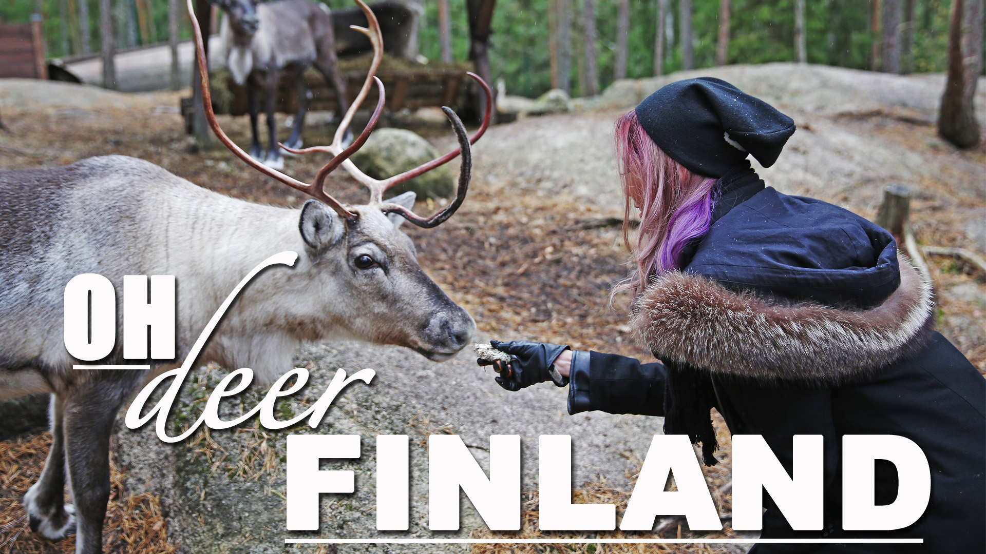 deer feeding in finland - camille co